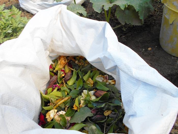 Proyectos escolares de compostaje