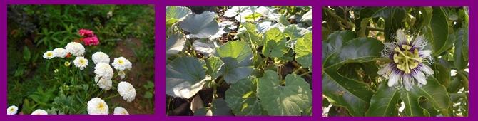 Qué necesitan las plantas para realizar la fotosíntesis