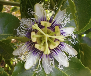 ¿Qué necesitan las plantas para realizar la fotosíntesis? (Preguntas)