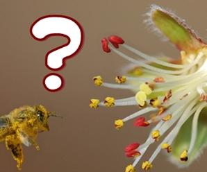 Preguntas-plantas