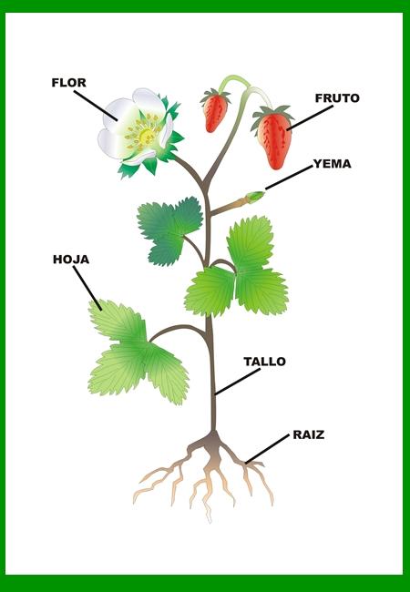 informacion sobre las plantas