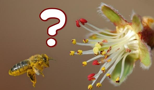 preguntas sobre las plantas