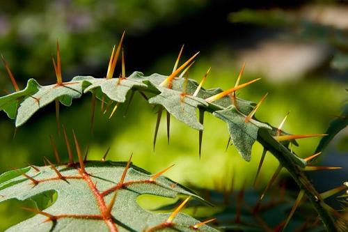 Defensa de las plantas contra herbívoros