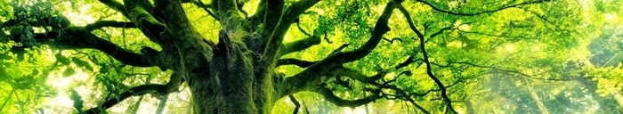 imagen bioma bosque