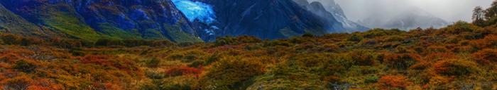 imagen bioma tundra