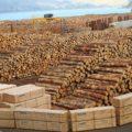 Problemas De La Tala De Árboles Y Causas De La Deforestación