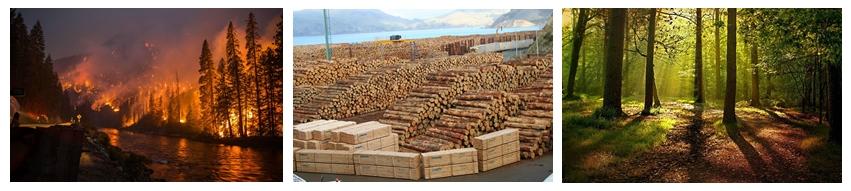 Problemas de la tala de Árboles