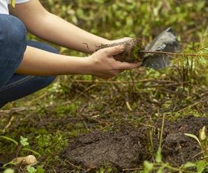Ventajas De La Reforestación Para El Medio Ambiente