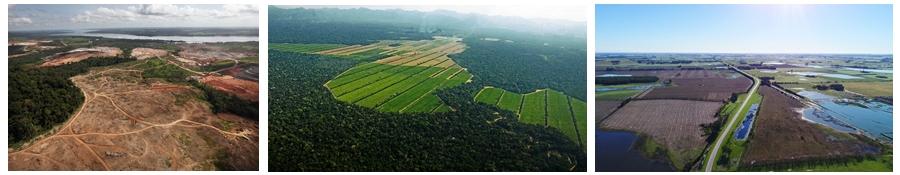 deforestacion y la tala inmoderada
