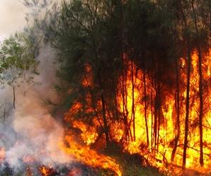 ¿Cuáles son las Causas y Consecuencias De La Deforestación?