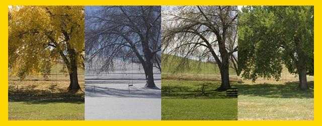 imagen estaciones del año