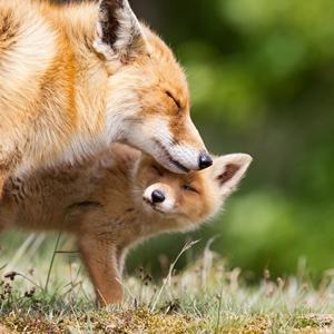 Importancia de la reproducción en animales