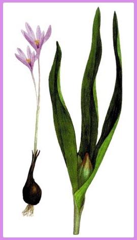 Reproduccion asexual en plantas ejemplos de cartas