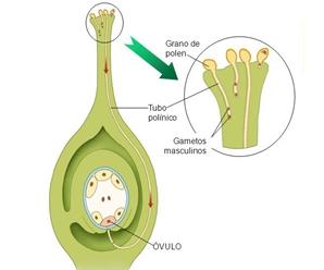 Proceso de Polinización y Fecundación de las Plantas