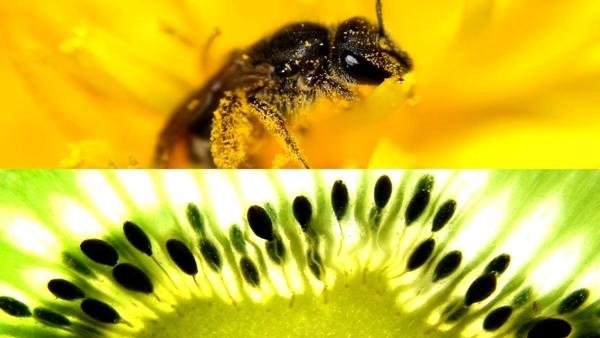 Polinización y la fertilización