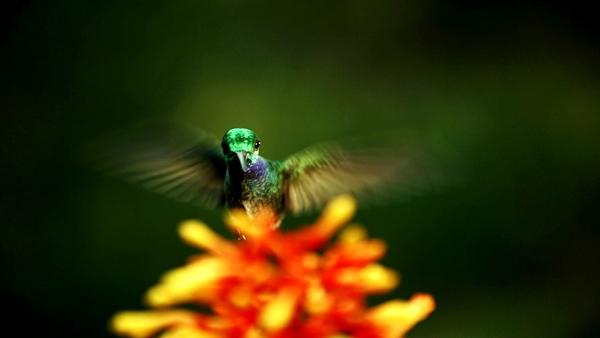 Transferencia de polen imagen