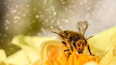 Imagen de una flor 2