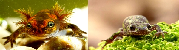 Anfibios imagen