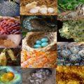 Reproducción De Los Animales Ovíparos (Animales Que Ponen Huevos)