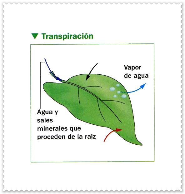Imagen la importancia del agua en las plantas