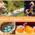 Qué son los Animales Ovíparos, Vivíparos y Ovovivíparos (Preguntas)