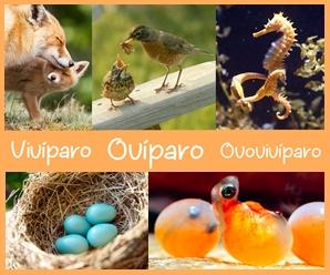 Qué Son Los Animales Ovíparos Vivíparos Y Ovovivíparos Preguntas