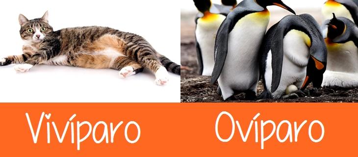 Vivíparo y Ovíparo Diferencia
