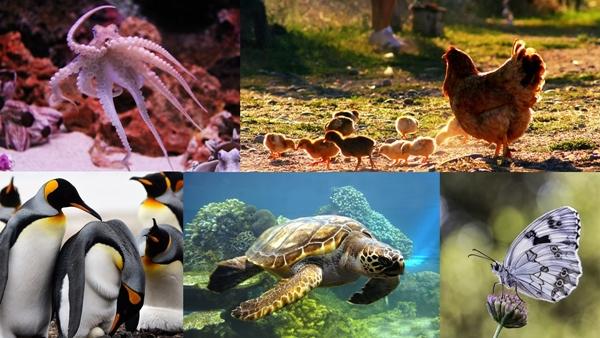 Animales que ponen huevos - Imagen
