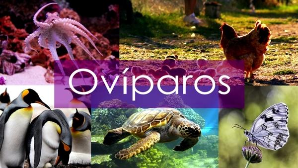 Ejemplos de animales ovíparos - Imagen