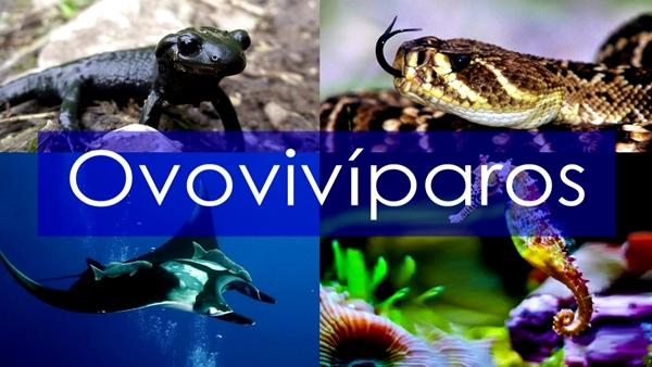 Ejemplos de animales ovovivíparos - Imagen