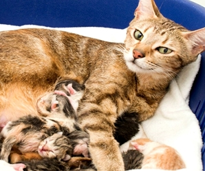 ¿Cómo Nacen los Animales Ovíparos, Vivíparos y Ovovivíparos?