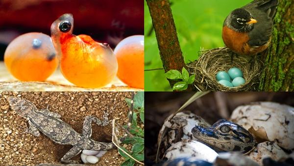 Animales que nacen del huevo - Imagen