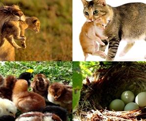 Diferencia entre Animales Ovíparos y Vivíparos ¿Cómo se Reproducen?