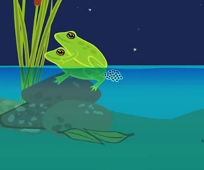 Fecundación externa en ranas - Imagen