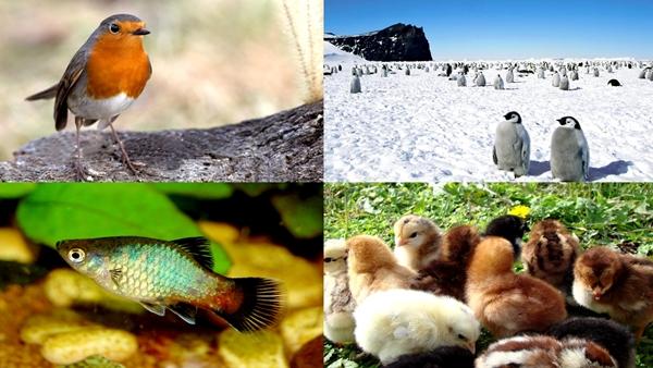 Qué son los animales ovíparos - Imagen