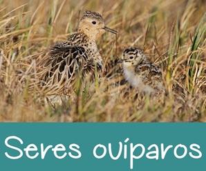 Seres Ovíparos y Vivíparos: Características y Ejemplos