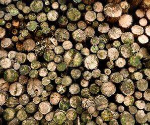 La Tala de Arboles y sus Consecuencias Ambientales