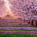 Reproducción De Los Árboles Y Las Plantas Con Flores