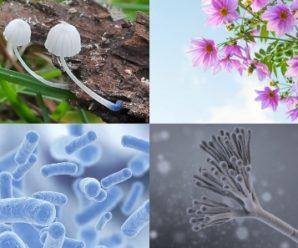 Ejemplos De Los 5 Reinos De La Naturaleza Con Imágenes