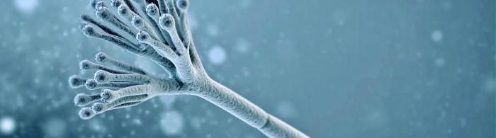 Fungi hongo Penicillium imagen
