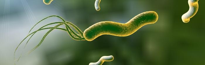 Monera bacteria estómago imagen
