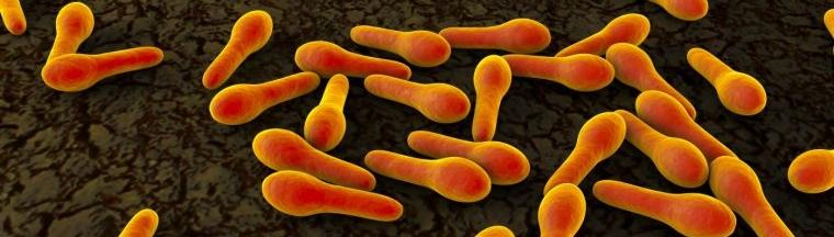 Monera bacteria tétanos imagen