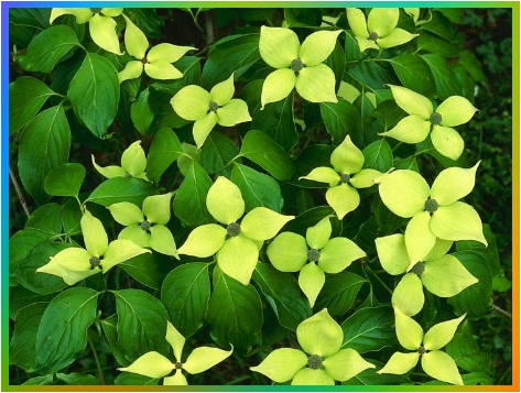 Plantae - Imagen