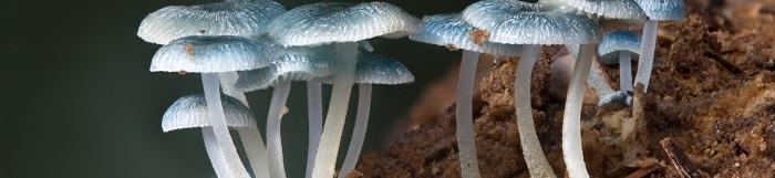 Imagen reino fungi