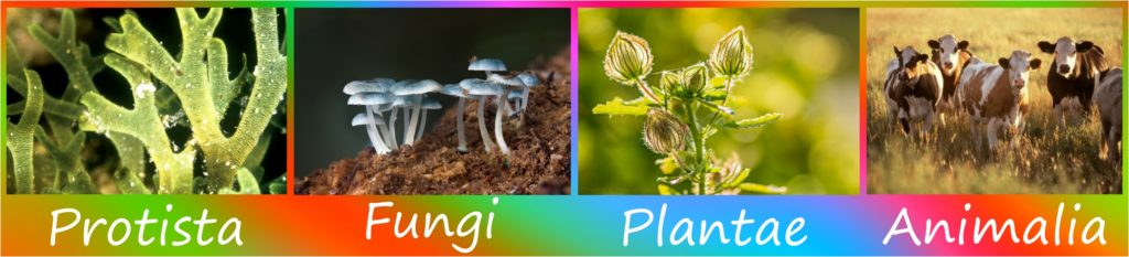 Organismos multicelulares - Imagen
