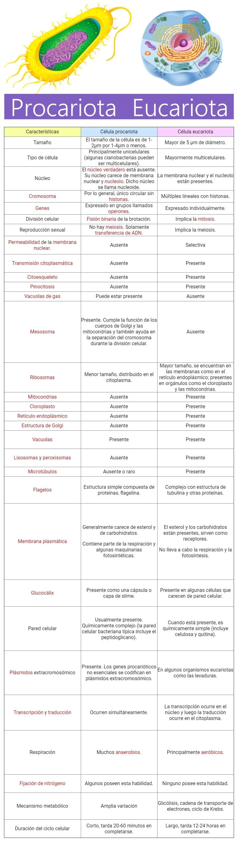 Diferencia Entre Célula Eucariota Y Procariota Cuadro