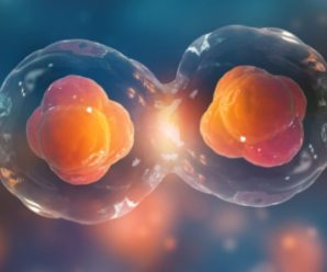 Características Generales De La División Celular Por Mitosis Y Meiosis