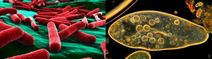 Imagen procariotas y eucariotas