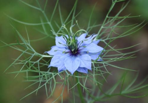 Flor Imagen.