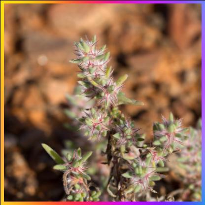 Imagen 2 adaptación de las plantas.